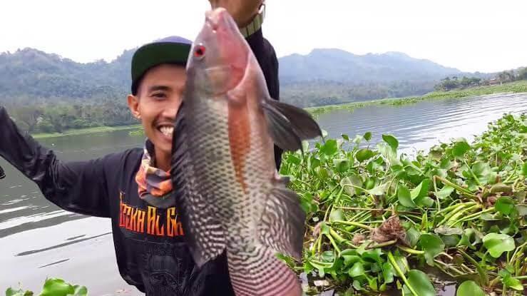 Waktu terbaik mancing ikan nila