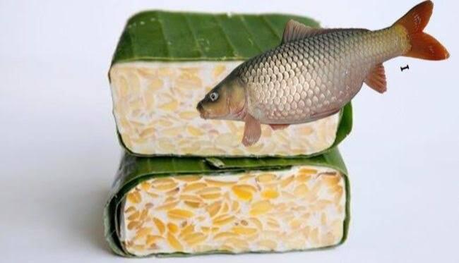 Berbagai Racikan Umpan Ikan Dari Tempe Untuk Mancing Di Air Tawar