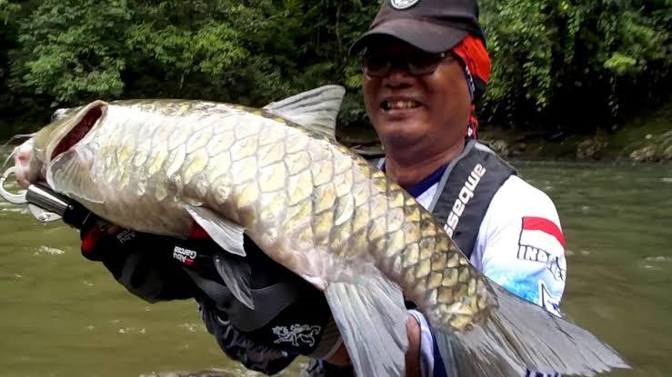 Cara mancing ikan mahseer