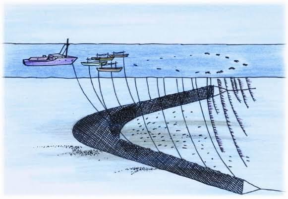 Gambar muroami di laut
