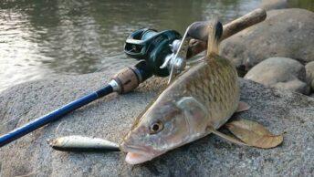 Umpan ikan sungai