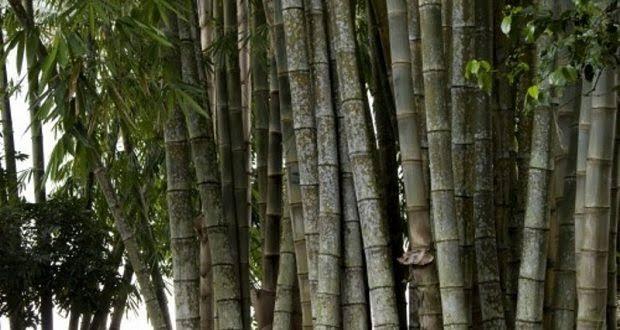 Joran pancing dari bambu