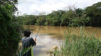 Cara mendeteksi ikan di sungai